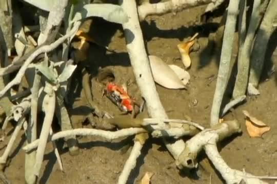 湿地生态 - 湿地公园红树林浮桥
