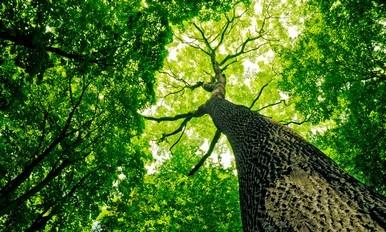 高级园艺课程 - 树木护理