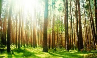 绿化活动- 认识本土树木