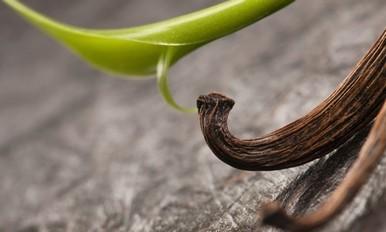 绿化活动-玫瑰花/茶花/香草种植及保养