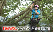Tree masters reach new heights